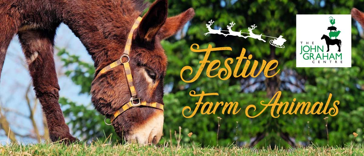 Festive Farm Animals at Meadow Grange Nursery