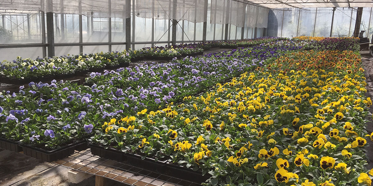 At Meadow Grange we have our own nursery site, a large site with greenhouses and growing areas outside for shrubs and perennials